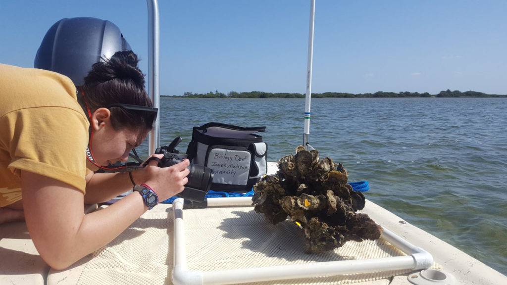 Student analyzes oysters on a boat in Florida